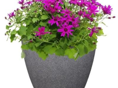 Những lưu ý khi chọn chậu hoa composite cho thiết kế nội, ngoại thất.