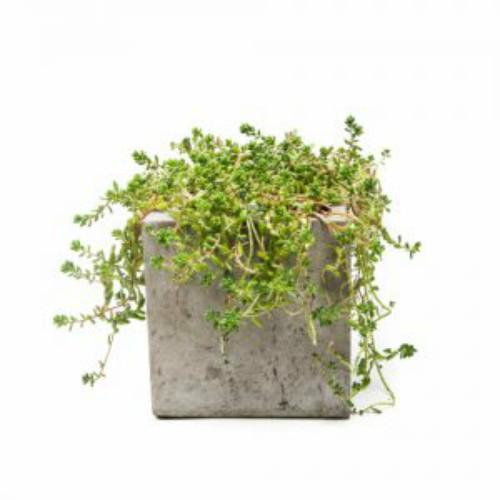 Chậu hoa composite hình hộp vuông
